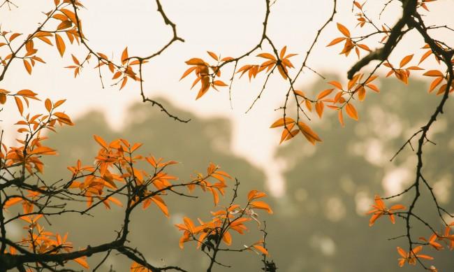 Захлаждане през уикенда, но от 28 октомври отново ще се стопли