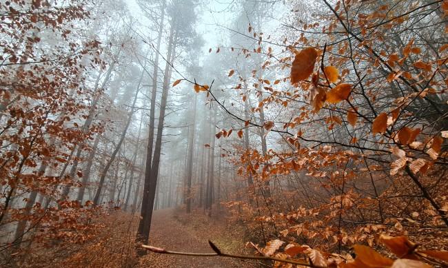 Студено и мъгливо утро, денят - слънчев с температури до 16°С