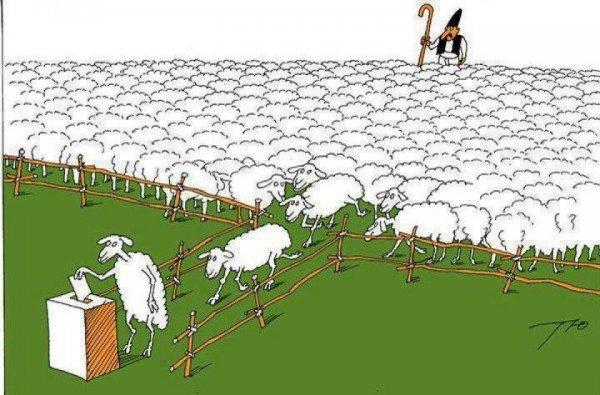 Резултат с изображение за овце гласуване