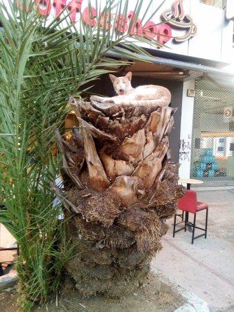 Кацнал на една палма