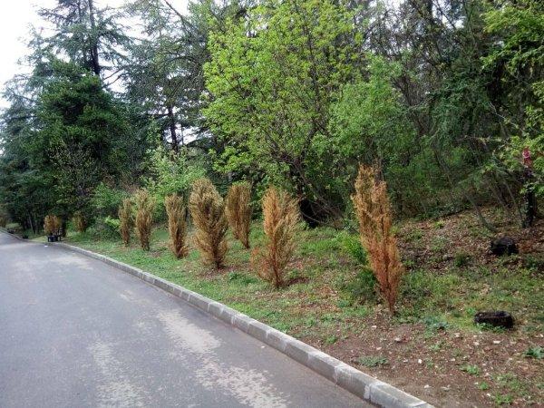 Общинско озеленяване