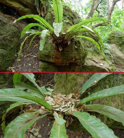 уникално растение в Австралия