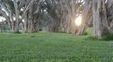 Зелен кoридор, а вирос няма на континента